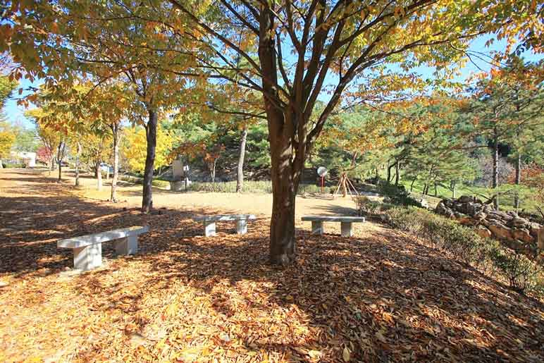Three benches surrounding a tree along a hiking trail in Wolmyeongdong