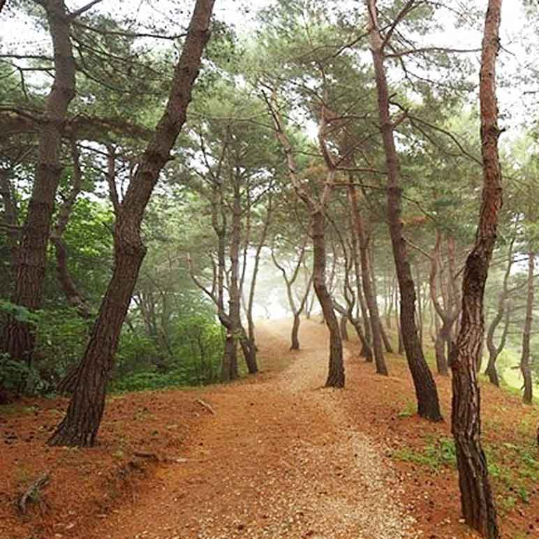 Hiking trail in Wolmyeongdong