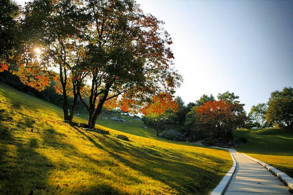 Path along the lawn sanctuary. Persimmon trees can be seen to the right.