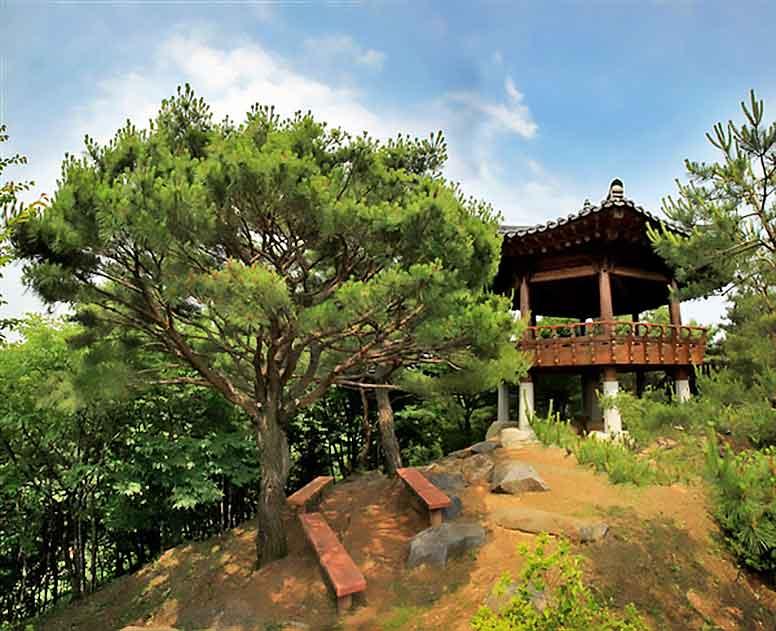 Pine tree next to the pavilion on Donggurae Mountain
