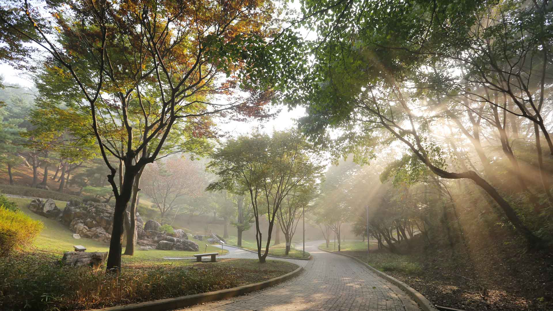 Wolmyeongdong-Autumn-2