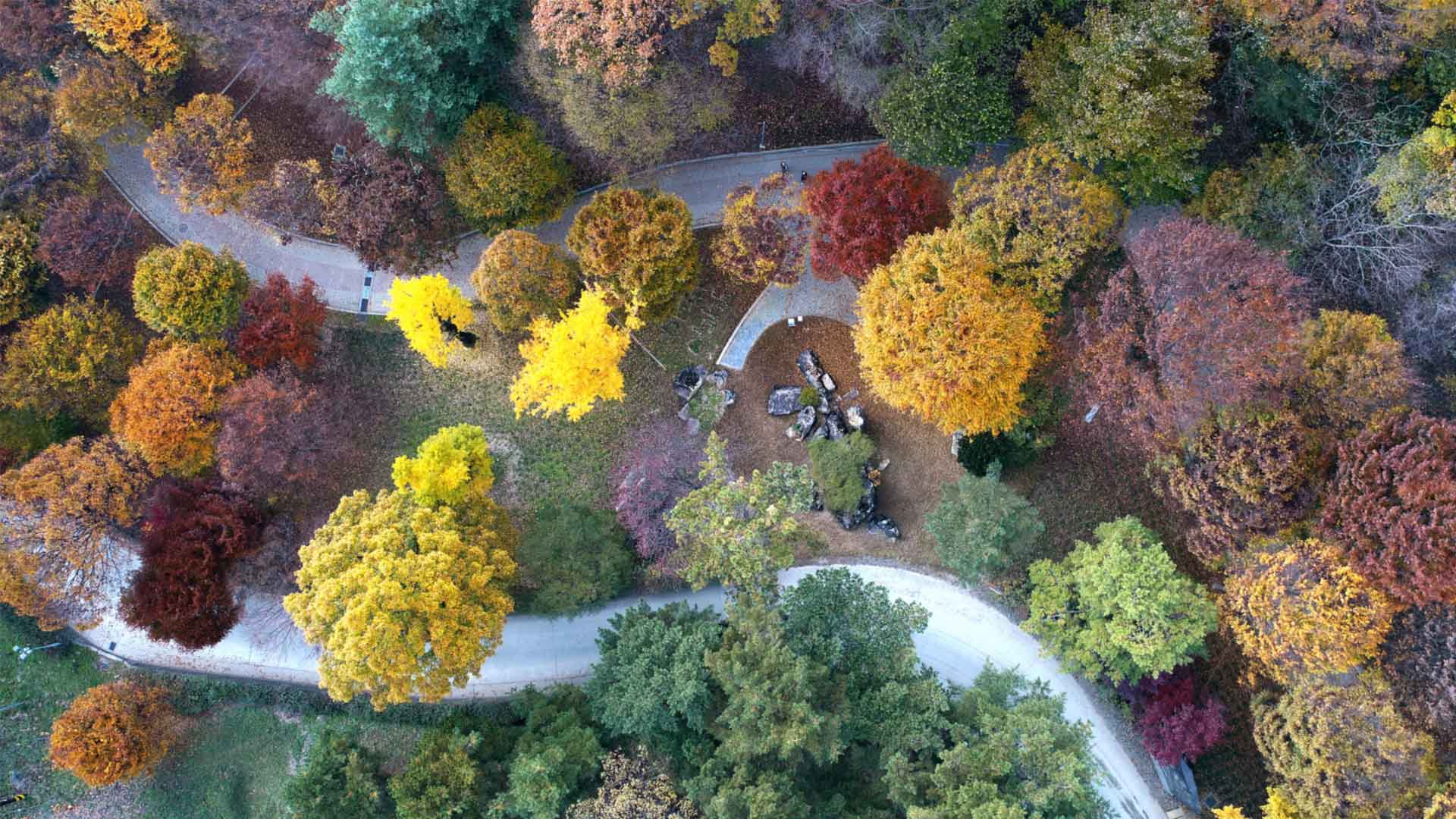 Wolmyeongdong-Autumn-9
